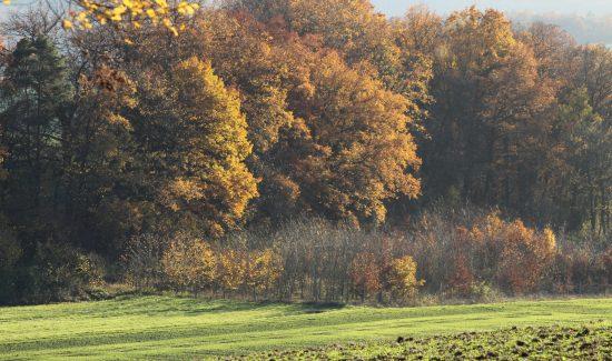 Herbstwald mit Abendsonne und Wiese