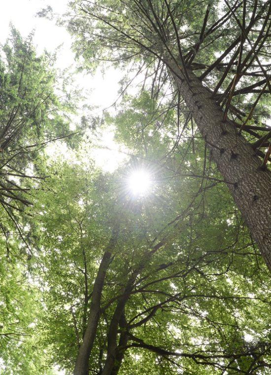 Wald-in-Deutschland-DEPI_Wald_1