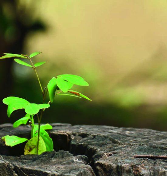 Baum Nachhaltigkeit von Holzpellets